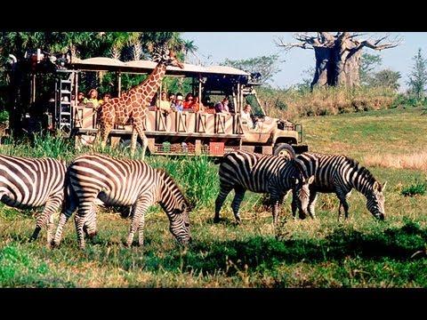 Kilimanjaro Safari Disney's Animal Kingdom Disney World HD Gorgeous! (Pandavision)