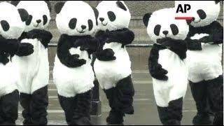 Tai Chi Performing 'pandas' Descend On London