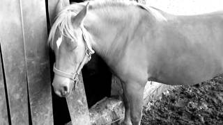 Santalan Sharlotta, In memoriam♥