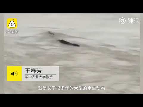 Did a giant sea creature really surface from the depths of the Yangtze River?