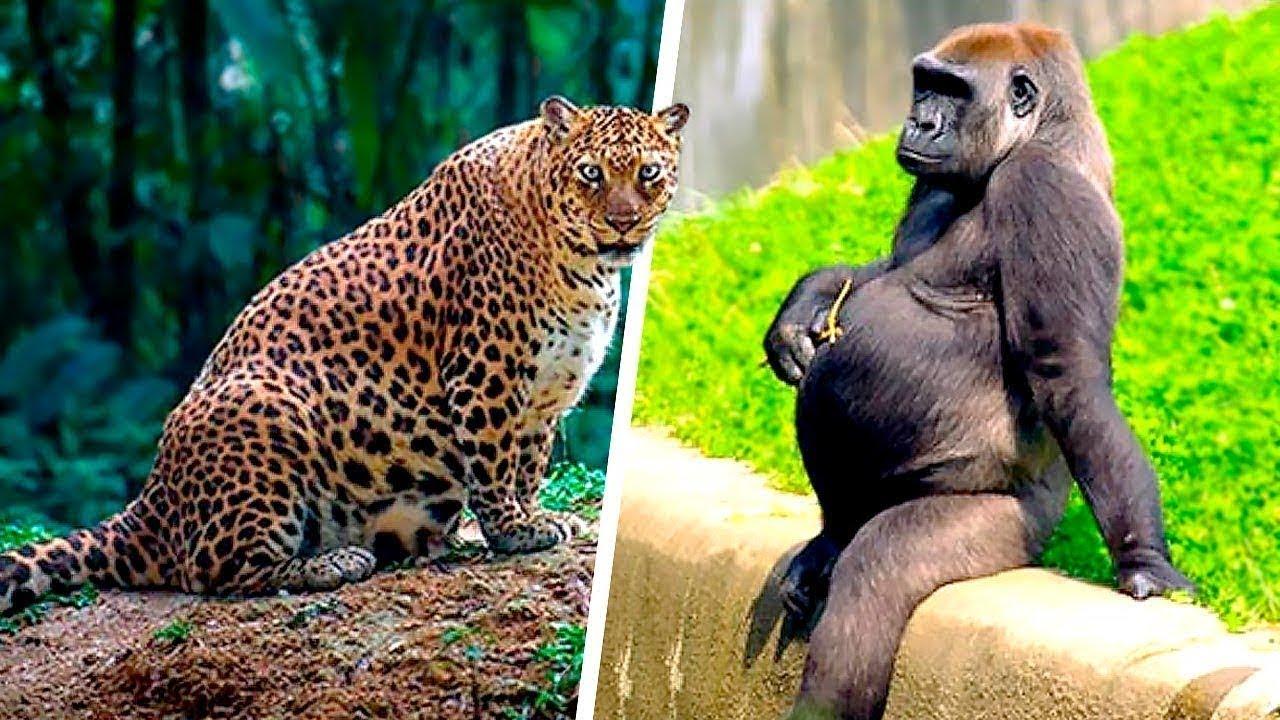 """صورة فيديو : هل سبق ورأيت تلك الحيوانات وهى فى فترة الحمل؟! """"حقائق مذهلة """".. !!😱"""