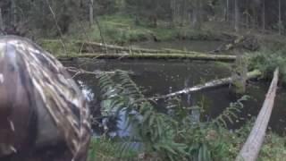 Охота на бобра с ружьем, Старею... Молодняк не стреляю! Hunting for beaver.