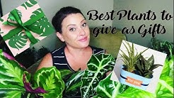 5 Plants to give as Gifts
