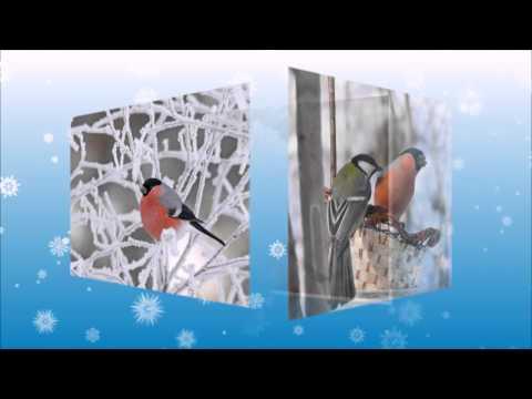 Зима птицы фото