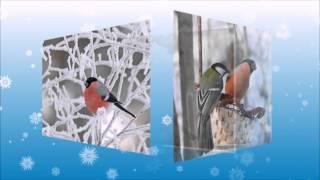 Зима птицы фото(Зима птицы фото http://youtu.be/2MCCSdN1Pps ------------------------------------------------------------------------------------- Покормите птиц зимой. Пусть..., 2014-11-15T09:33:53.000Z)
