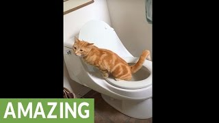 Cat instinctively uses toilet without any training