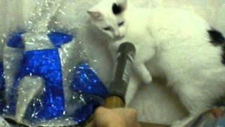 Кот против биты