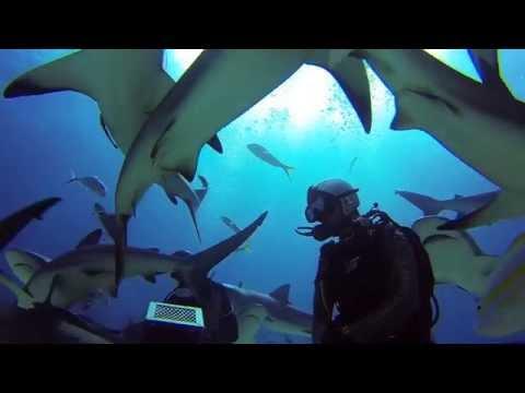 GoPro: Nassau Bahamas Shark Dive with Stuart Cove