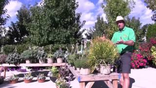 Tender Succulents: Part 6 - Unique Plants