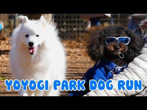 Yoyogi Park Dogrun [Deerstalker in Japan]