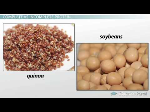 3 Protein Quality & Completeness Types & Examples