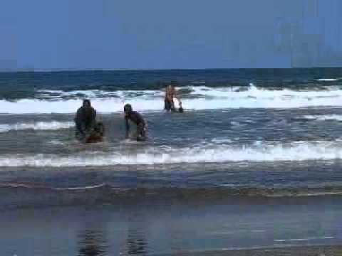 Kotu beach - Gambia