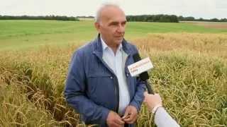 Nowe odmiany prymitywnych form zbóż