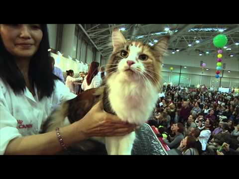 SuperCat Show 2014 - BIS Cat 2