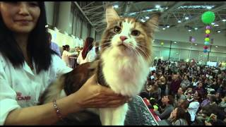 SuperCat Show 2014 - BIS Cat 2