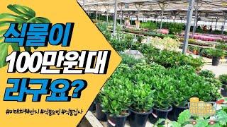 식물이 100만원대라구…