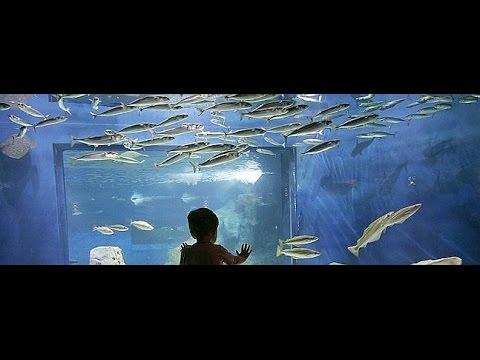El mejor acuario de peces para un ni o youtube for Mejores peces para acuario