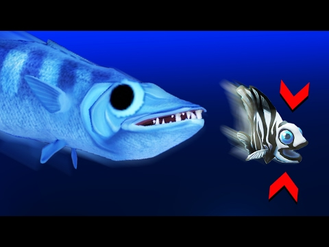 THE LEGENDARY BARRACUDA! - Feed And Grow Gameplay (NEW UPDATE)