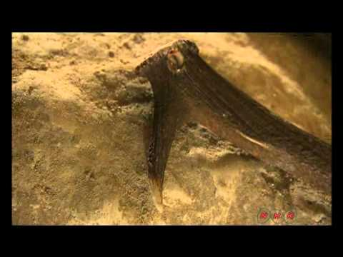 Neolithic Flint Mines at Spiennes (Mons) (UNESCO/NHK)