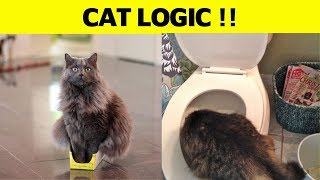 50+ Never Ending Cat Logic Funny Pictures