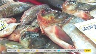 Вся правда о рыбе, которая попадает на наши столы.