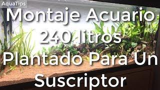 Montaje Acuario 240 litros Plantado Para Un Suscriptor  || AquaTips