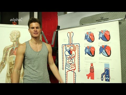 Körper- Und Lungenkreislauf - Blutkreislauf   Alpha Lernen Erklärt Biologie
