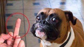 Download Video 🐕 Anjing Ini Gigit Tangan Tuannya Ketika Diacungkan Jari Tengah.. MP3 3GP MP4