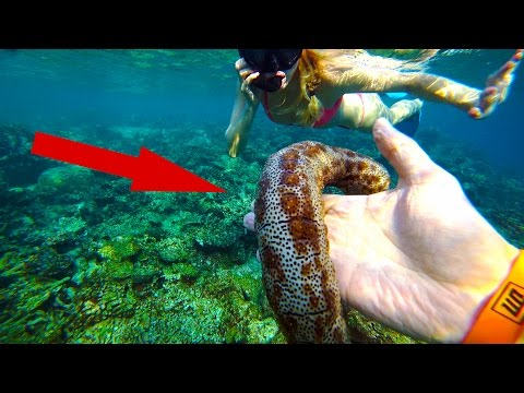 Мальдивы. 99% Людей Боятся Этого! Подводный Мир. Ночная Рыбалка