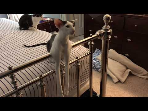 Mission Impossible:  Changing bed sheets with my cats