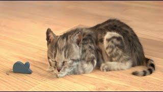 El gatito lindo encuentra un hogar