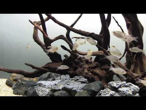 Пресноводный авквариум