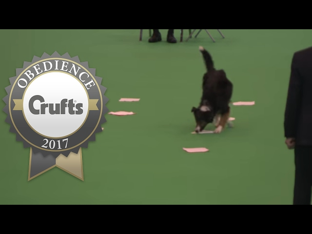 Obedience Championship - Bitches - Scent - Part 2 | Crufts 2017