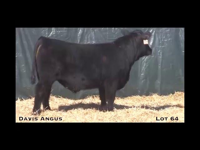 Davis Angus Lot 64