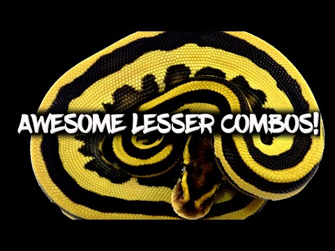 Download How to make awesome 'Lesser' Ball Python Combos!