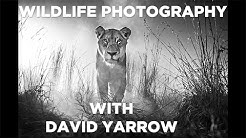 Wildlife Photography - David Yarrow Shares His Photography Techniques - GMAX STUDIOS