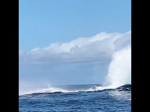 Joey Brooks - Paddle Boarders Witness Close-Up Whale Breach