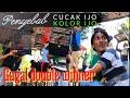 Cucak Hijau Kolor Ijo Gagal Double Winner Tidak Main Di Sesi Selanjutnya  Mp3 - Mp4 Download
