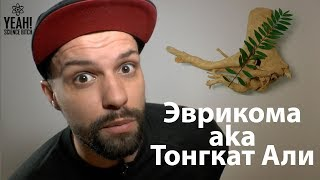 Эврикома aka Тонгкат Али для спорта и секса
