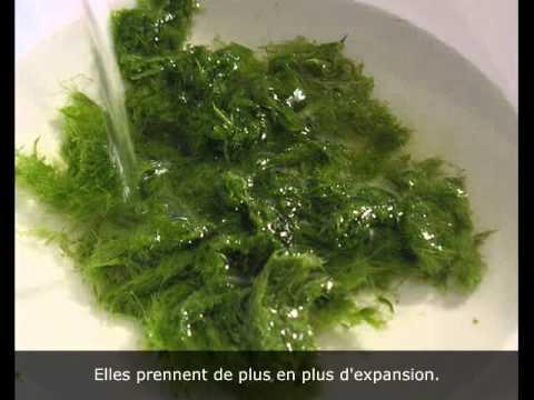 hqdefault - Les fibres insolubles dans l'eau