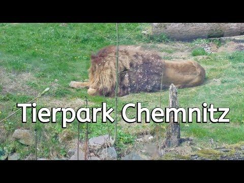 Tierpark Chemnitz // Löwe // Affen // Trobenhaus // Zwergflusspferde / ein schöner Tierpark