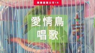 愛情鳥唱歌 | 團團圓圓生活日常#18
