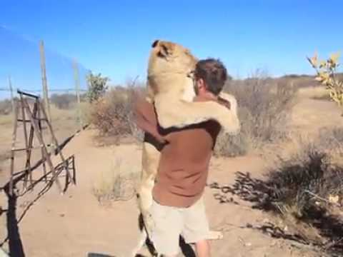 Leonessa abbraccia ragazzo amico