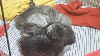 Kittens Sleep All Day So Cute | Funny Kittens New Born !