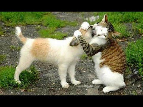 Meilleures Chiens et chats drôles de Janvier 2015 [FULL HD VIDEO]