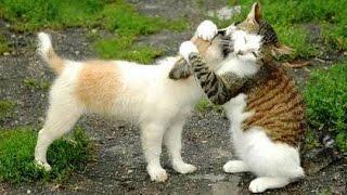 besonderes Video / Katzen haben immer gute Ideen ;-) Für Katzenfreunde und diejenigen, die es werden