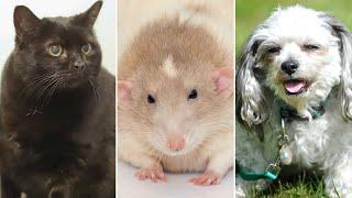 TOP Videos Talking Pets Funny Animals Part2