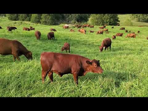 Fall stockpiling tips to save winter hay feeding.