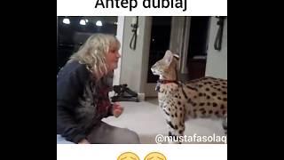 Mix - Savana Kedisi Vs Yaslı Kadın ( Antep Dublaj )