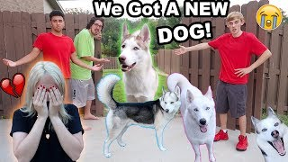 MY DOGS RAN AWAY!! (I CRIED) (PRANK)